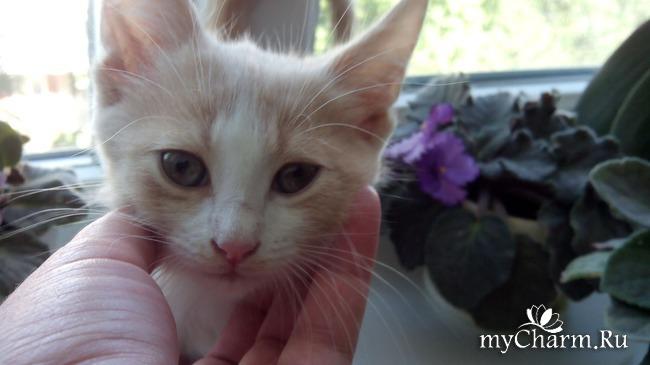 фото 3: Пристройство котят: затишье было недолгим