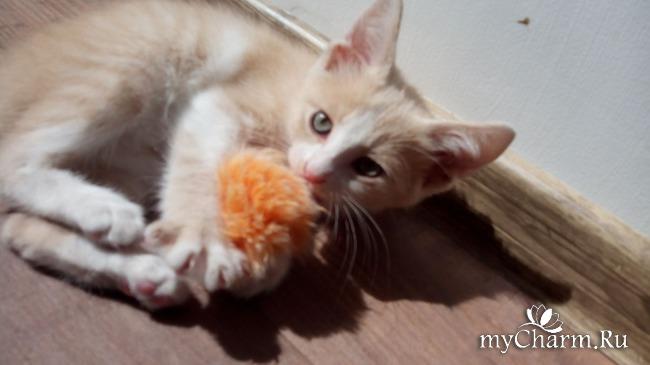 фото 5: Пристройство котят: затишье было недолгим