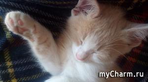 Спит котенок
