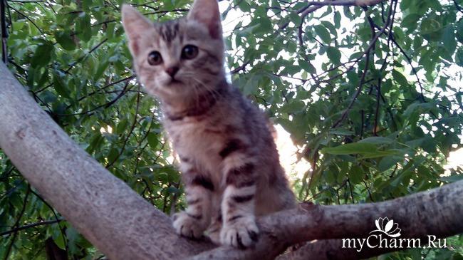 подкинутый котенок