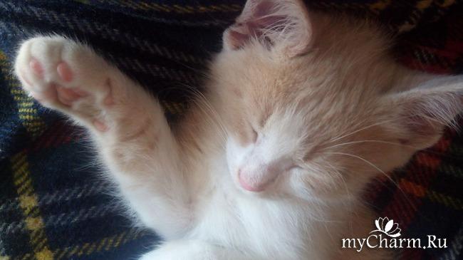 фото 5: Бездомные котята. Плюс еще один подкидыш
