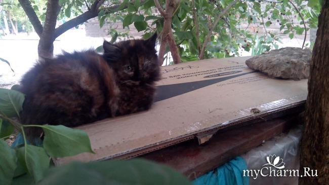 пристройство диких котят
