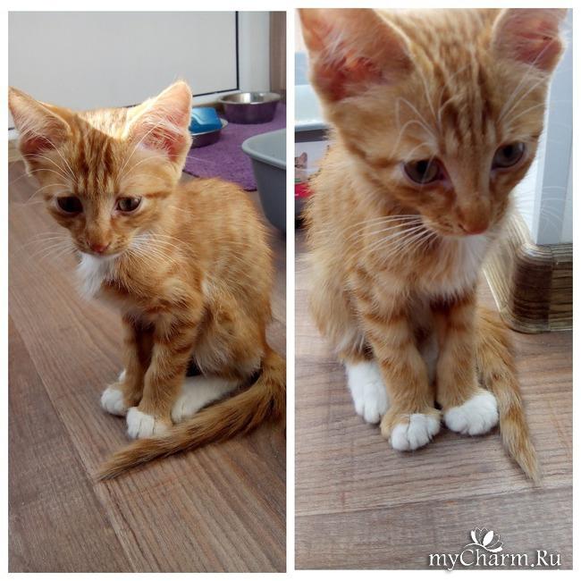 фото 5: Лечение котенка: есть успехи