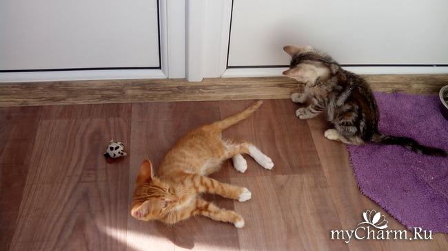 фото 6: Лечение котенка: есть успехи