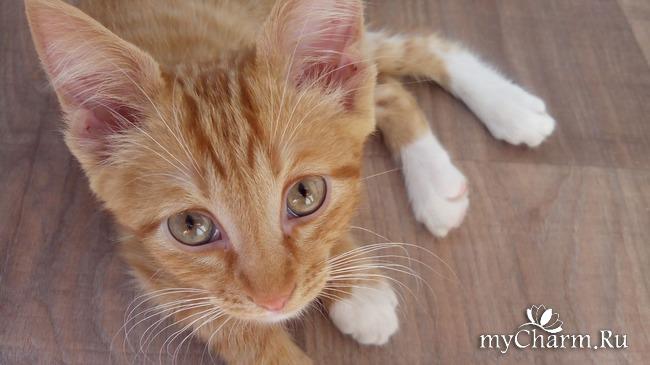 фото 8: Лечение котенка: есть успехи