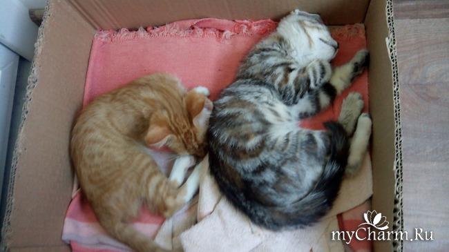 фото 7: Лечение котенка: есть успехи