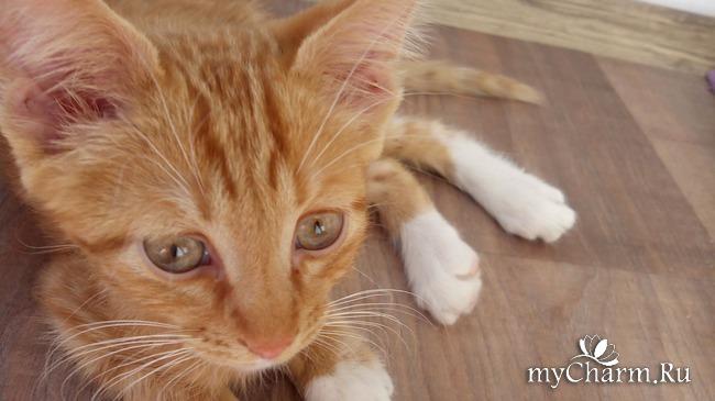 фото 3: Лечение котенка: есть успехи