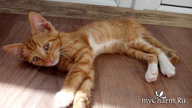 фото 4: Лечение котенка: есть успехи