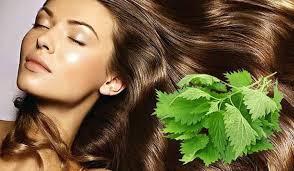 Выпадение волос. Народные средства: отвар крапивы