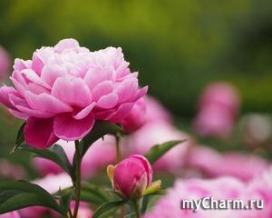 Нежный цветок весны!