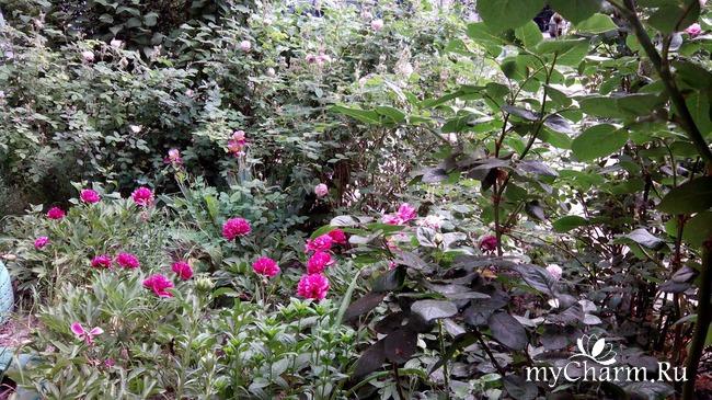 Еще немножко цветочков