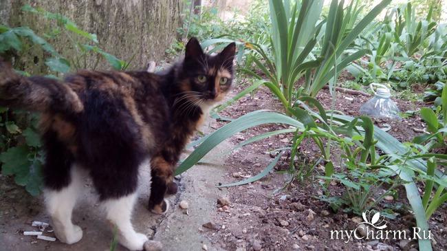 Круговорот котов в природе