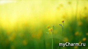 """Флешмоб """"ФотоЧарм"""", 43 этап, """"Вспомним лето, цветочные клумбы"""", призы от Paclan"""