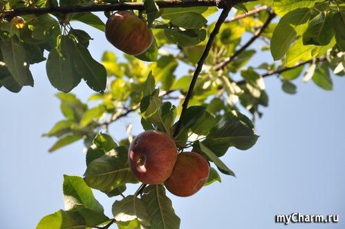 Флешмоб ФотоЧарм. ГОЛОСОВАНИЕ. (3) Уродился урожай — собирай дары природы