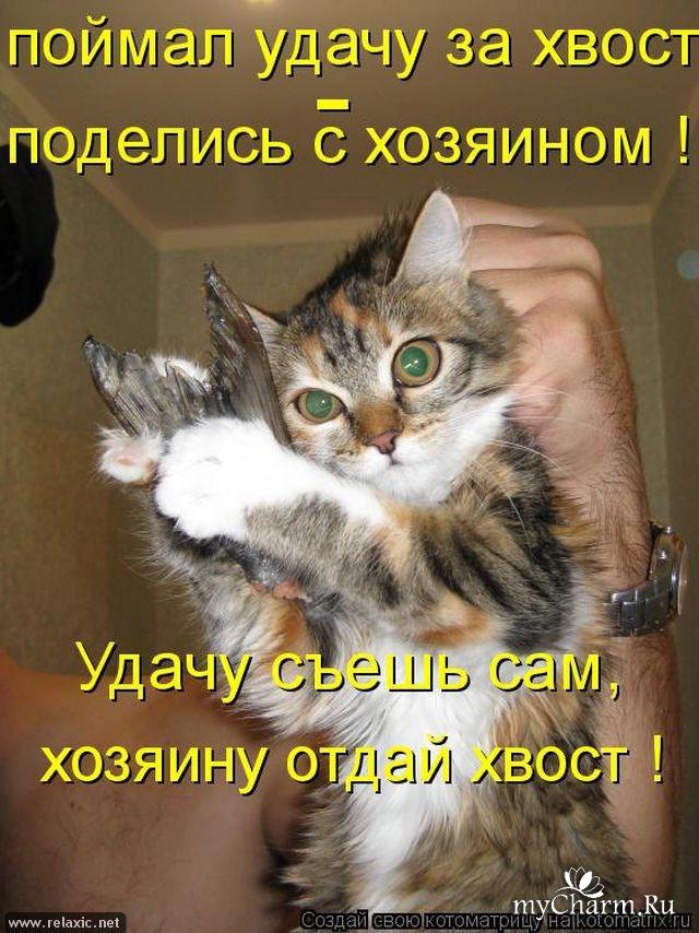 Поздравления, картинки котов смешные с подписями