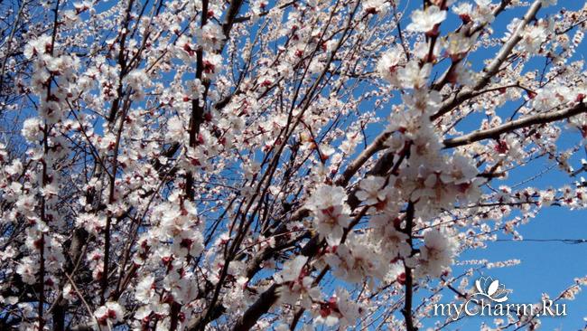 Порадую вас еще весною