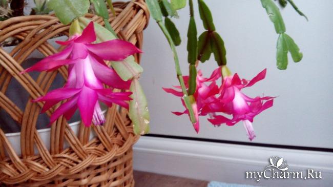 фото 2: Зимние цветочки