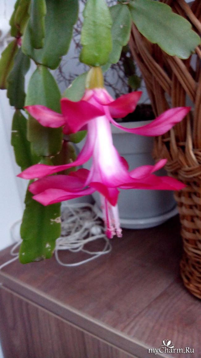 фото 3: Зимние цветочки