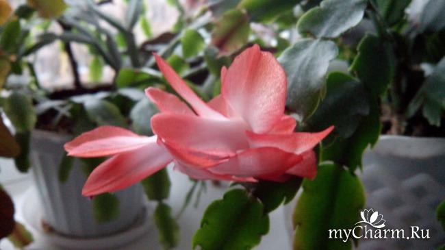 фото 4: Зимние цветочки