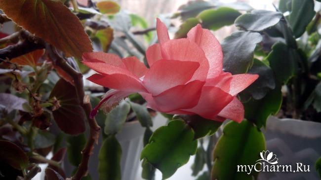 фото 5: Зимние цветочки