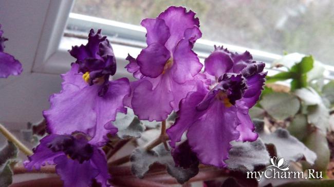 фото 6: Зимние цветочки