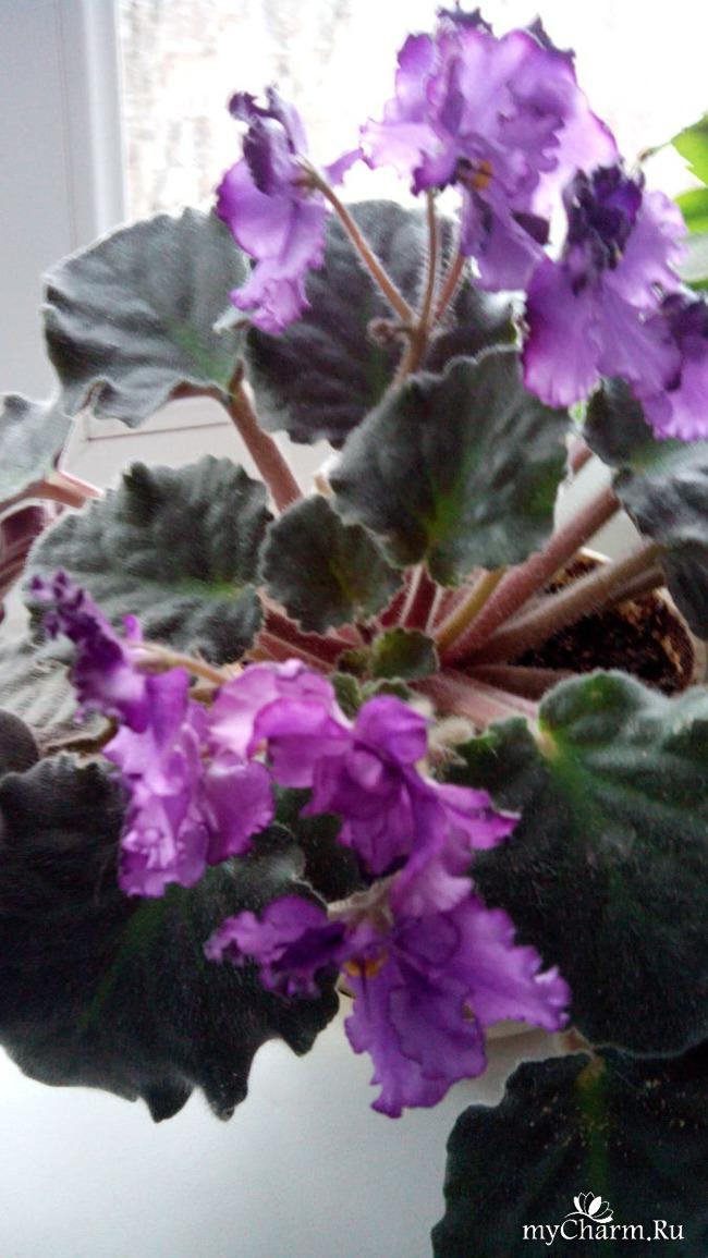 фото 7: Зимние цветочки