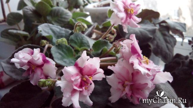фото 9: Зимние цветочки