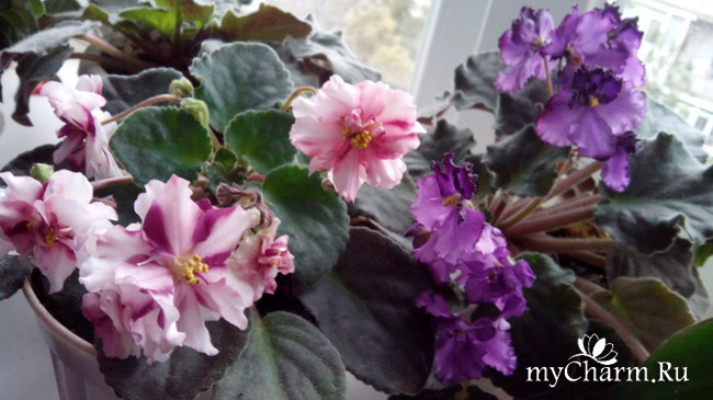 фото 8: Зимние цветочки
