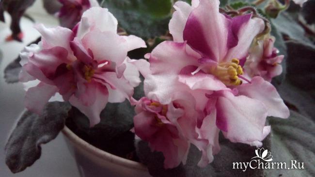 фото 10: Зимние цветочки