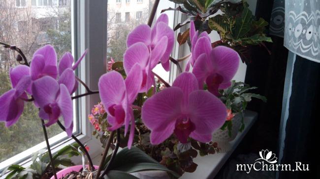 фото 11: Зимние цветочки