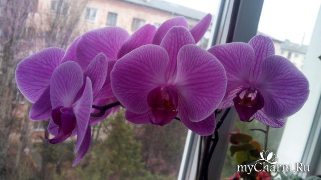 фото 12: Зимние цветочки