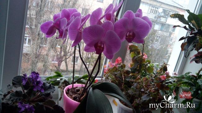 фото 14: Зимние цветочки