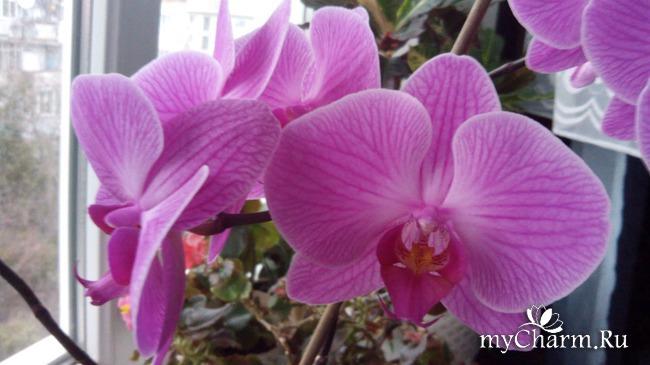 фото 13: Зимние цветочки