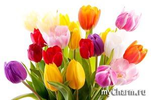 Согласно легенде, на дне тюльпана спрятано счастье...
