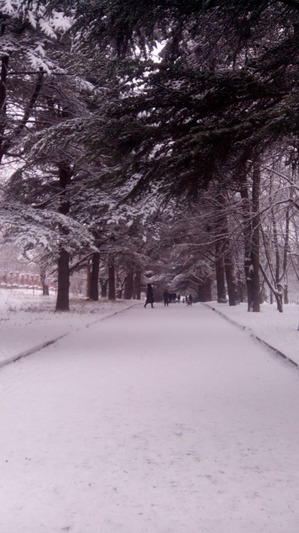 И у нас выпал снег