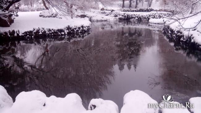 фото 2: И у нас выпал снег