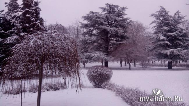 фото 5: И у нас выпал снег