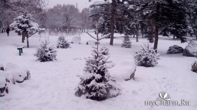 фото 7: И у нас выпал снег