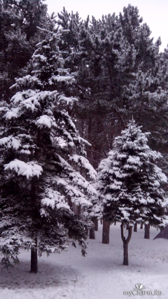 фото 9: И у нас выпал снег