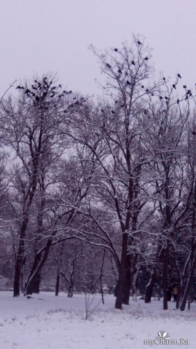 фото 11: И у нас выпал снег
