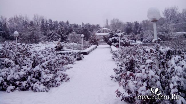 фото 12: И у нас выпал снег
