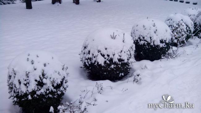 фото 13: И у нас выпал снег