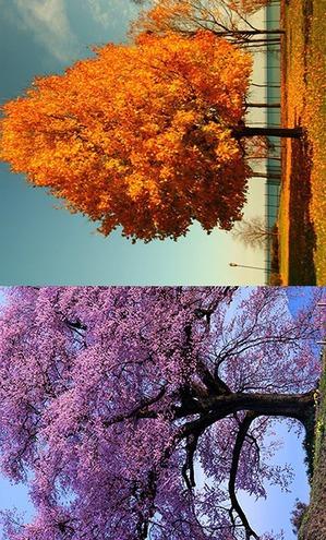 Цветотипы Весна и Осень: макияж, окрашивание волос и прочие важные нюансы