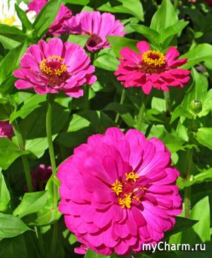 Цветы этого лета