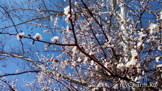 Еще немного весны