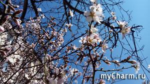 Весна-красна