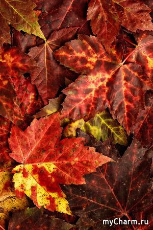 Осень: а какая она у вас?