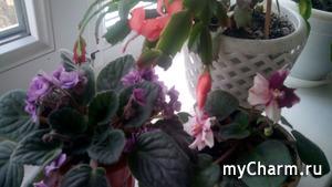 Цветочки с подоконника