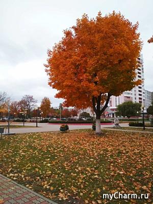 GalaSi. Осенний марафон стройности. Долой лень. Итоги