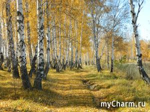 Примыкаю к флэшмобу с осенними фото. Наш золотой октябрь.